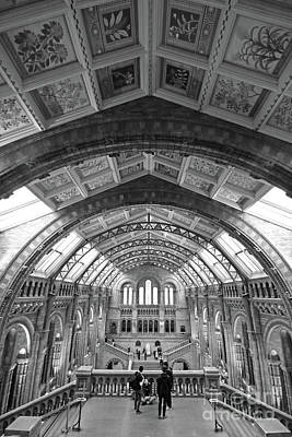 Photograph - Natural History Museum London 6 by Julia Gavin