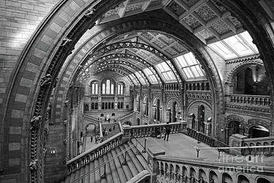 Photograph -  Natural History Museum London 7 by Julia Gavin