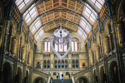 Natural History Museum London Art Print