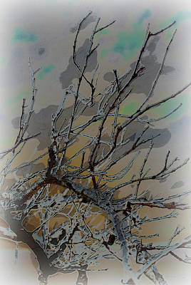 Natural Inversion - 2 Art Print by Amanda Vouglas