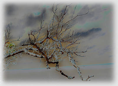 Natural Inversion -1 Art Print by Amanda Vouglas