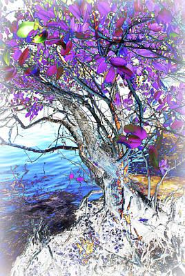 Natural Inversion 6 Art Print by Amanda Vouglas