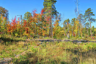 Photograph - Natural Landscaping by John M Bailey