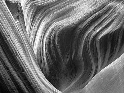 Photograph - Natural Law by Paki O'Meara