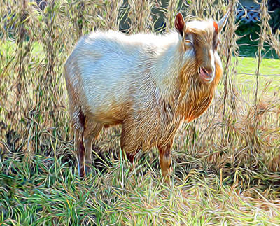 Photograph - Natural Lawn Mower by Pamela Walton