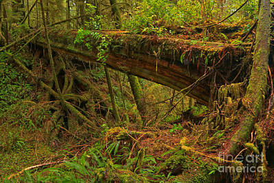 Photograph - Natural Log Bridge by Adam Jewell