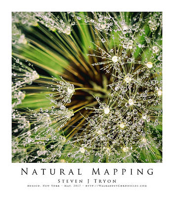Natural Mapping Art Print by Steven Tryon