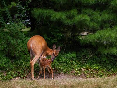 Nursing Deer Photograph - Natural Mom by Jackie Sajewski