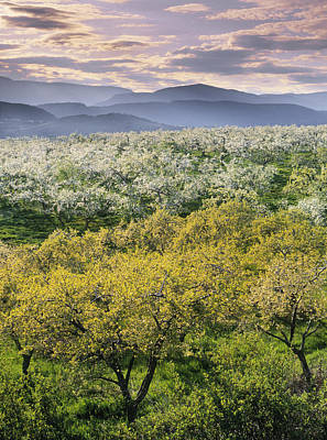 Natural Moments Photography Orchards Art Print by Darwin Wiggett