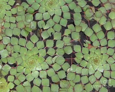 Photograph - Natural Mosaic  by Barbie Corbett-Newmin