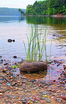 Photograph - Natural Rock Garden by Cathy  Beharriell