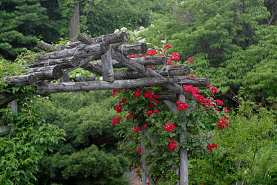 Photograph - Natural Rose Arbor by Living Color Photography Lorraine Lynch