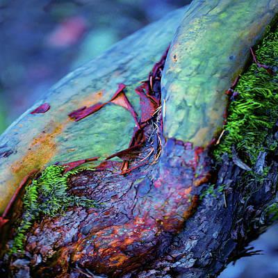 Digital Art - Natural Shift by Richard Laeton