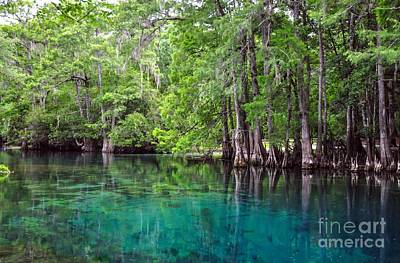 Chiefland Photograph - Natural Spring by Debbie Green
