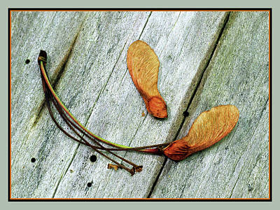 Photograph - Natural Still-life by Carolyn Derstine