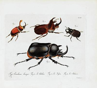 U-2 Painting - Natural System Of All Known Domestic And Foreign Insects by Zoologie