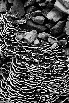 Photograph - Natural Textures by Roy Cruz