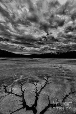 Photograph - Natural Tree Pattern In Ice by Thomas R Fletcher