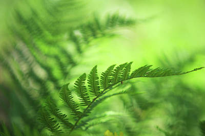 Photograph - Natural Vibes. Green World by Jenny Rainbow
