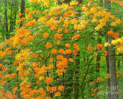 Photograph - Natural Wild Azaleas  by Rand Herron