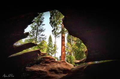 Photograph - Natural Window by Andrea Platt