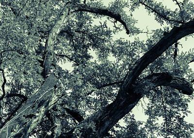 Photograph - Natural Wonder by Andrea Mazzocchetti