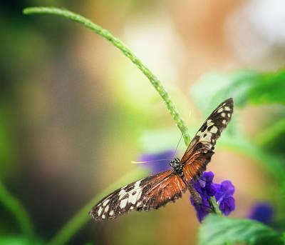 Photograph - Natural Wonders II by Garvin Hunter