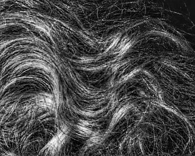 Photograph - Naturally Curly by Patricia E Sundik