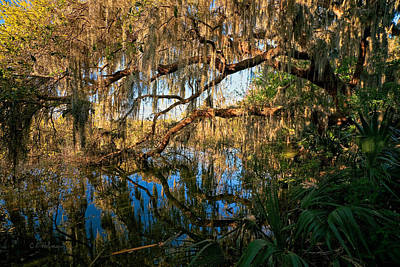 Photograph - Naturally Florida by Christopher Holmes