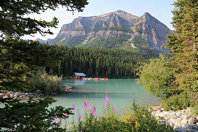 Photograph - Naturally Framed Lake Louise by Carol Groenen