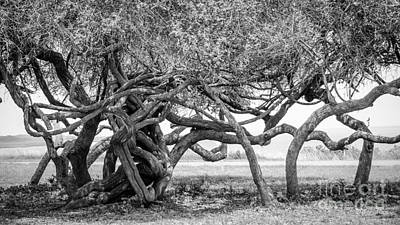 Photograph - Naturally Gnarled Nature by Debra Martz