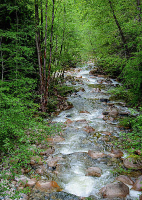 Photograph - Naturally Pure Stream Backroad Discovery by Roxy Hurtubise