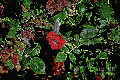 Photograph - Nature 1-9 by Ray Shrewsberry