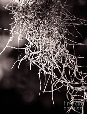 Photograph - Nature Abstract  Black And White by Andrea Anderegg