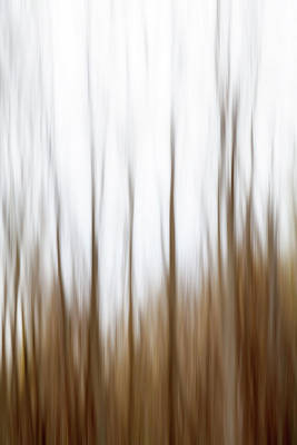 Photograph - Nature Abstract No. 02 by Pictorial Decor