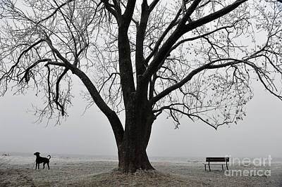 Photograph - Nature And Dog At Rest by Randi Grace Nilsberg