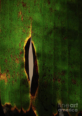Abstract Photograph - Nature Art - Banana Leaf Split by Prar Kulasekara