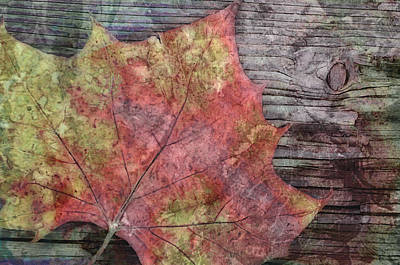 Digital Art - nature - art - Fallen Leaf by Ann Powell