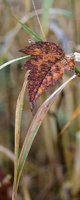 Photograph - Nature Art by I'ina Van Lawick