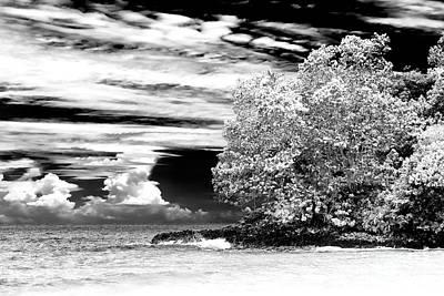 Photograph - Nature At Red Frog Beach Panama by John Rizzuto