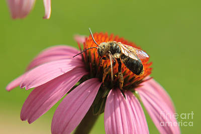 Photograph - Nature At Work by Lori Mellen-Pagliaro