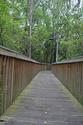 Photograph - Nature Boardwalk by Aimee L Maher Photography and Art Visit ALMGallerydotcom