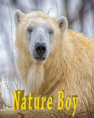 Photograph - Nature Boy Polar Bear by LeeAnn McLaneGoetz McLaneGoetzStudioLLCcom