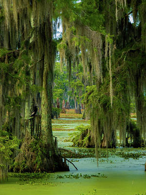 Photograph - Swamp Curtains In June by Kimo Fernandez