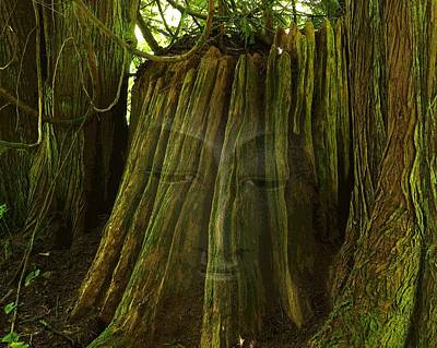 Photograph - Nature Buddha by I'ina Van Lawick