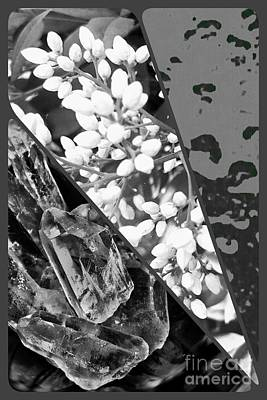 Photograph - Nature Collage In Black And White by Rachel Hannah