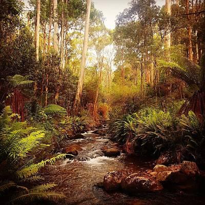 Pyrography - Nature Colour by Glen Johnson