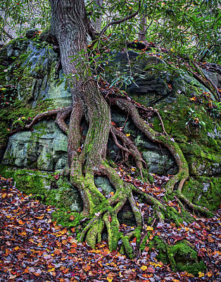 Photograph - Nature Finds A Way by Andy Crawford