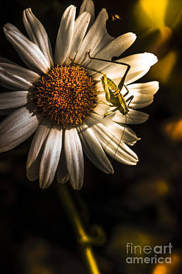 Locust Photograph - Nature Fine Art Summer Flower With Insect by Jorgo Photography - Wall Art Gallery