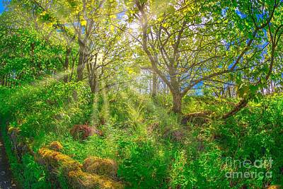 Photograph - Nature Forest Background by Benny Marty